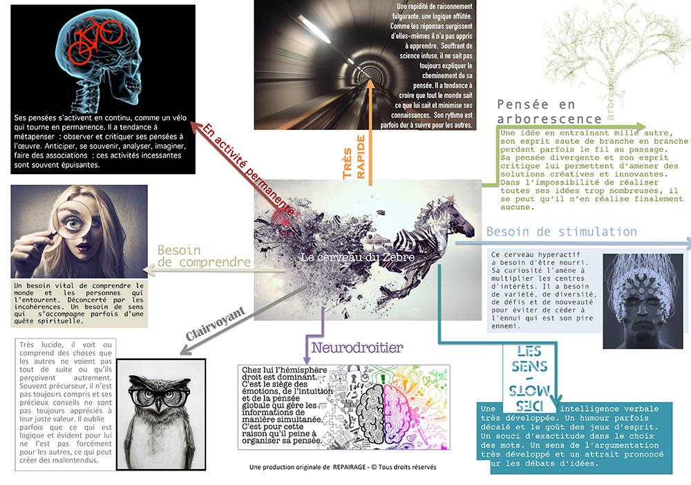 Le cerveau des zèbres hpi
